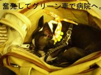 Photo_138