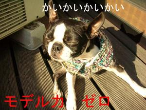Photo_234