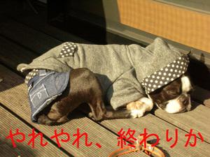Photo_238