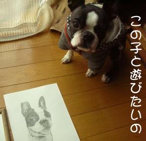 Photo_239