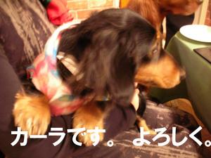 Photo_255
