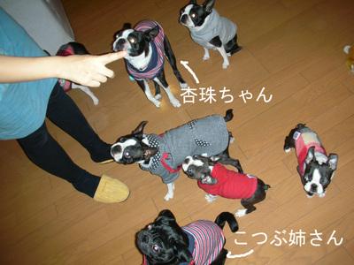 Photo_269