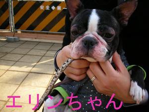 Photo_294