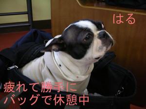 Photo_302