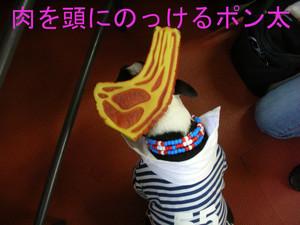 Photo_313