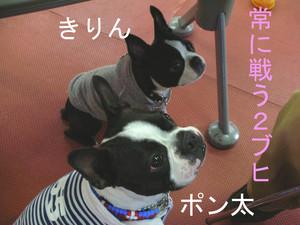 Photo_325