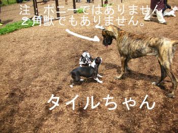Photo_348