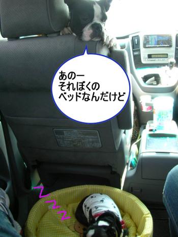 Photo_363