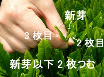 Photo_382
