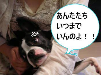 Photo_404