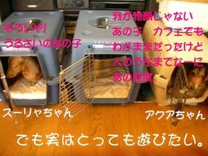 Photo_71