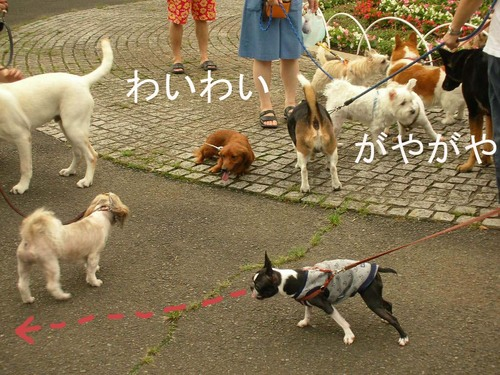 Photo_89