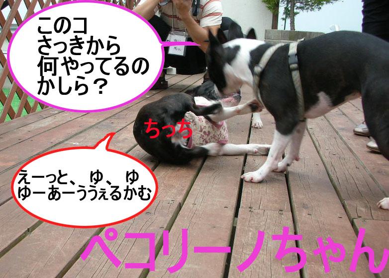 Photo_413