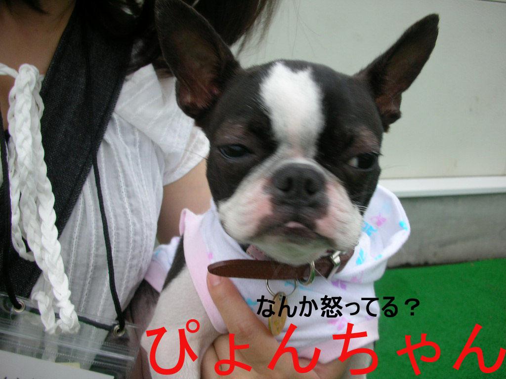 Photo_420