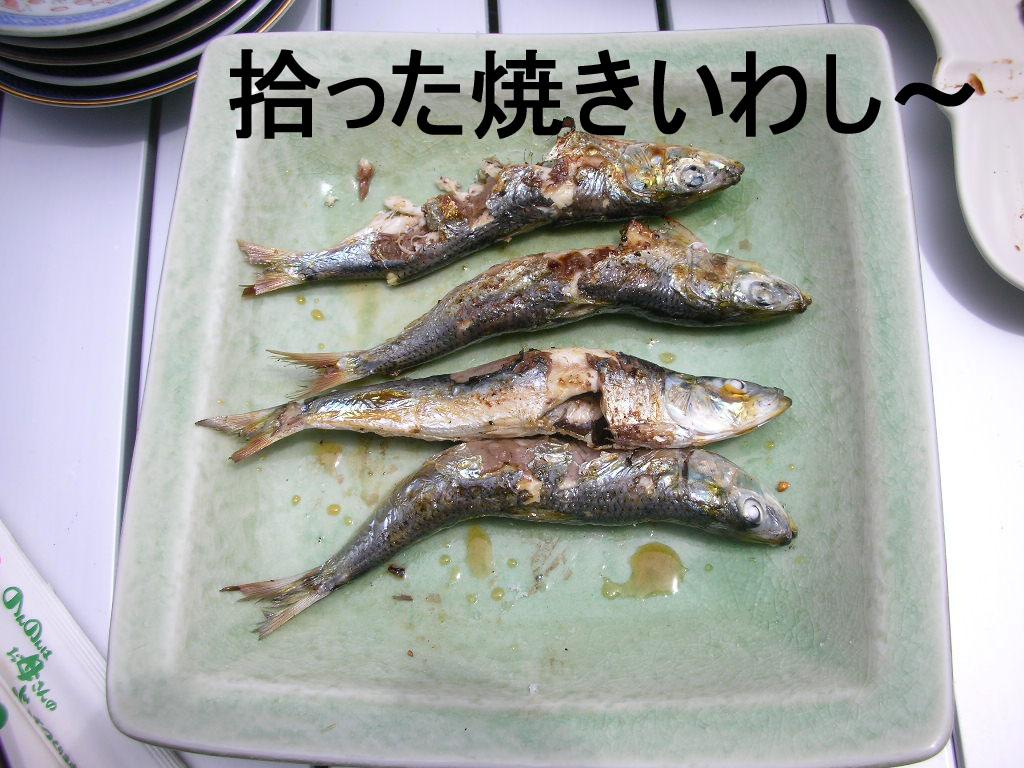 Photo_462
