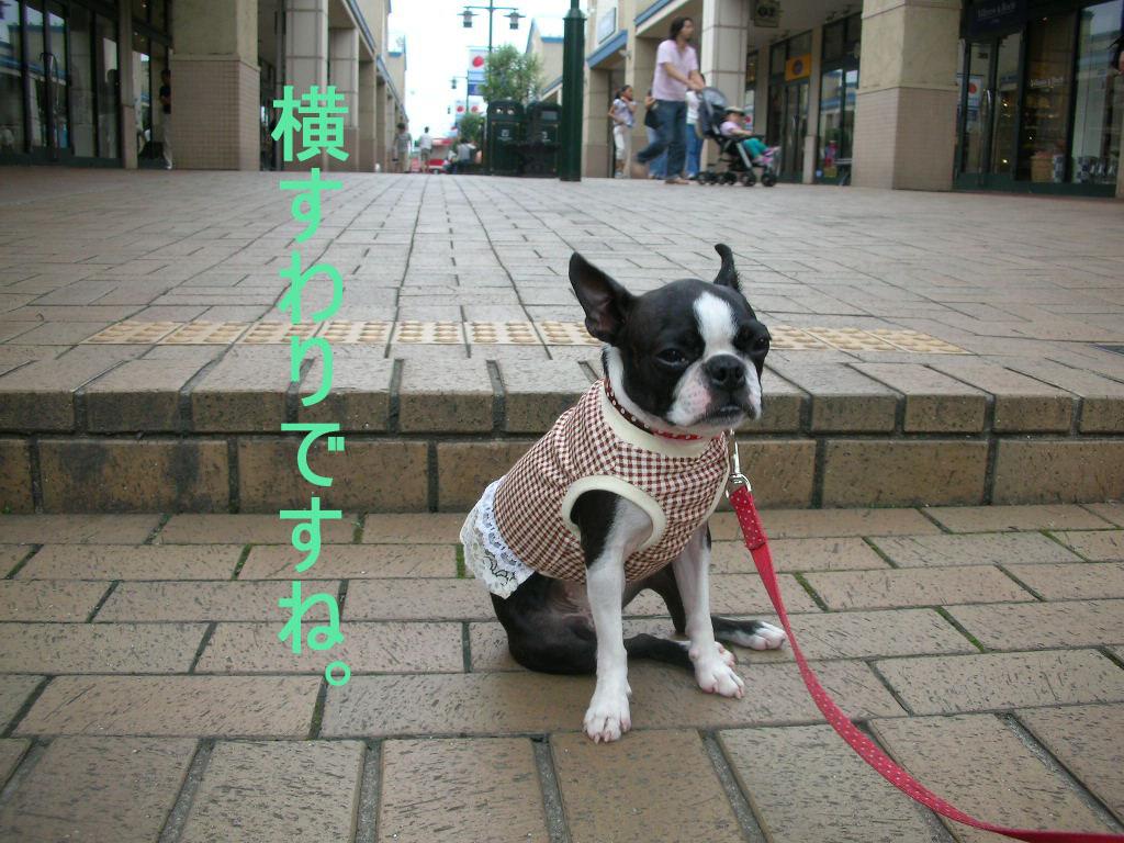 Photo_471